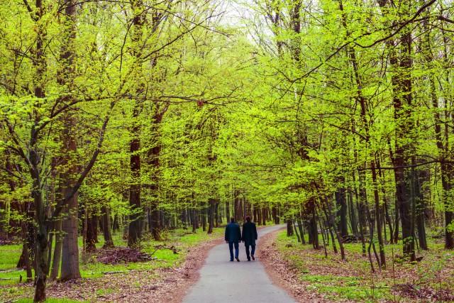 istoc_canstock_2 men walking in woods
